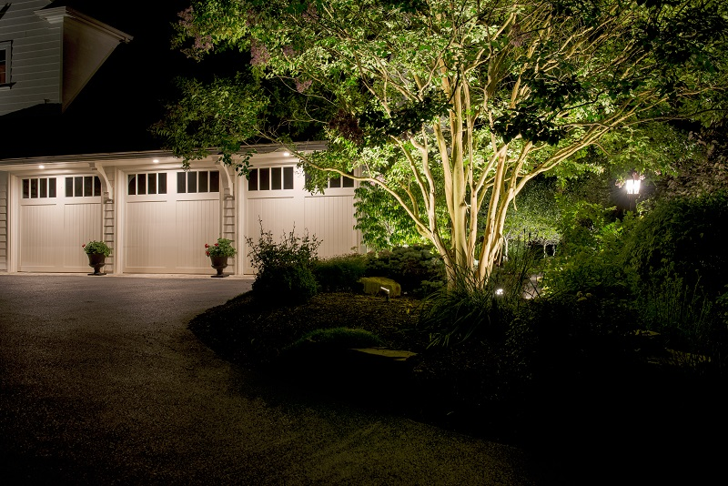 Outdoor Up Lighting for Beauty and Security - Mull UpLights on Multi-stem Tree - Burkholder