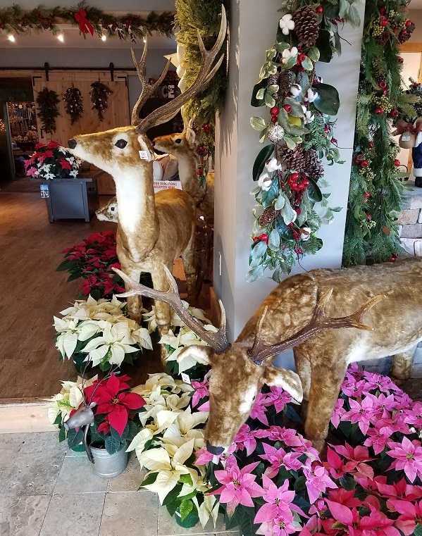 Reindeer and Poinsettias at the Burkholder Holiday Pop Up Market 2018
