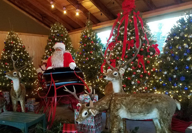 Santa and Reindeer with Christmas trees - Burkholder HOliday Pop Up Market 12-2-