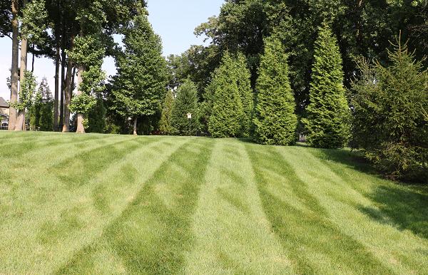 Landscaping backyard turf, plan your 2020 backyard paradise, Burkholder