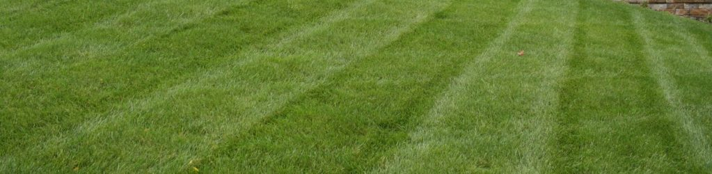 The 4 Elements of Professional Turf Care to Help Your Lawn